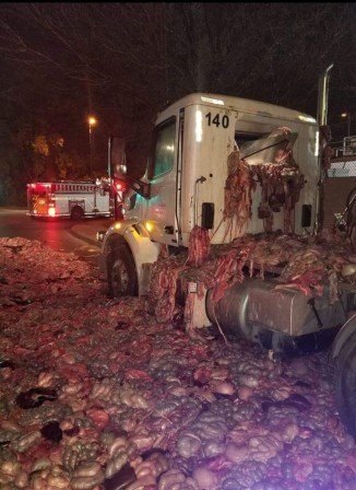 Truck carrying pig entrails crashes on Henri Bourassa Boulevard in the Montreal borough of Rivière-des-Prairies porc cochon viande.jpg