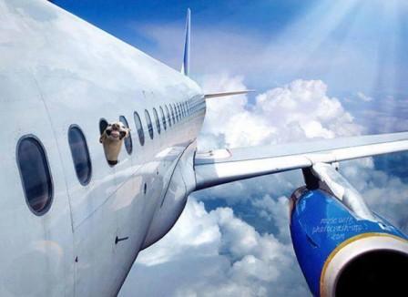 chien_avion_bonjour.jpg