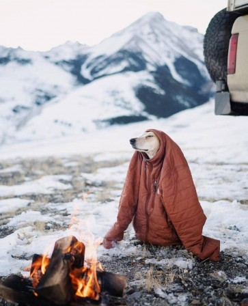 chien camping froid.jpg