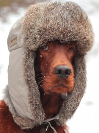 chien_froid_casquette_fourree.jpg