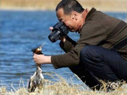 photographe animalier les dérives.jpg