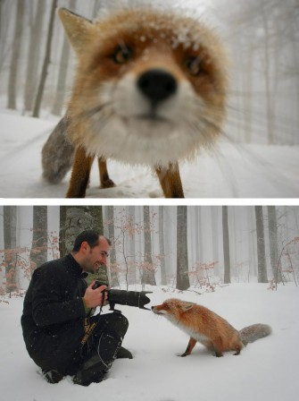 renard interview neige.jpg