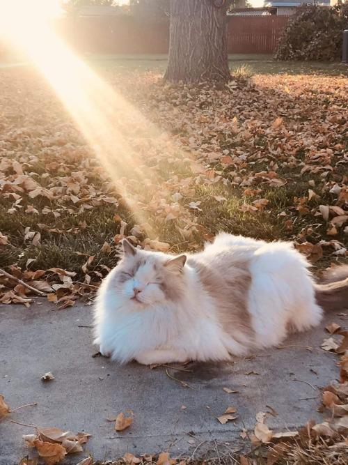 """Résultat de recherche d'images pour """"chat soleil automne"""""""