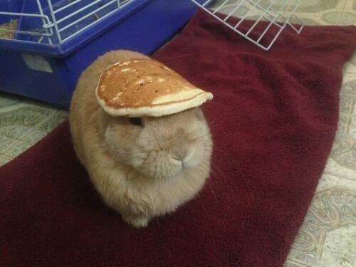lapin_crepe_pancake.jpg
