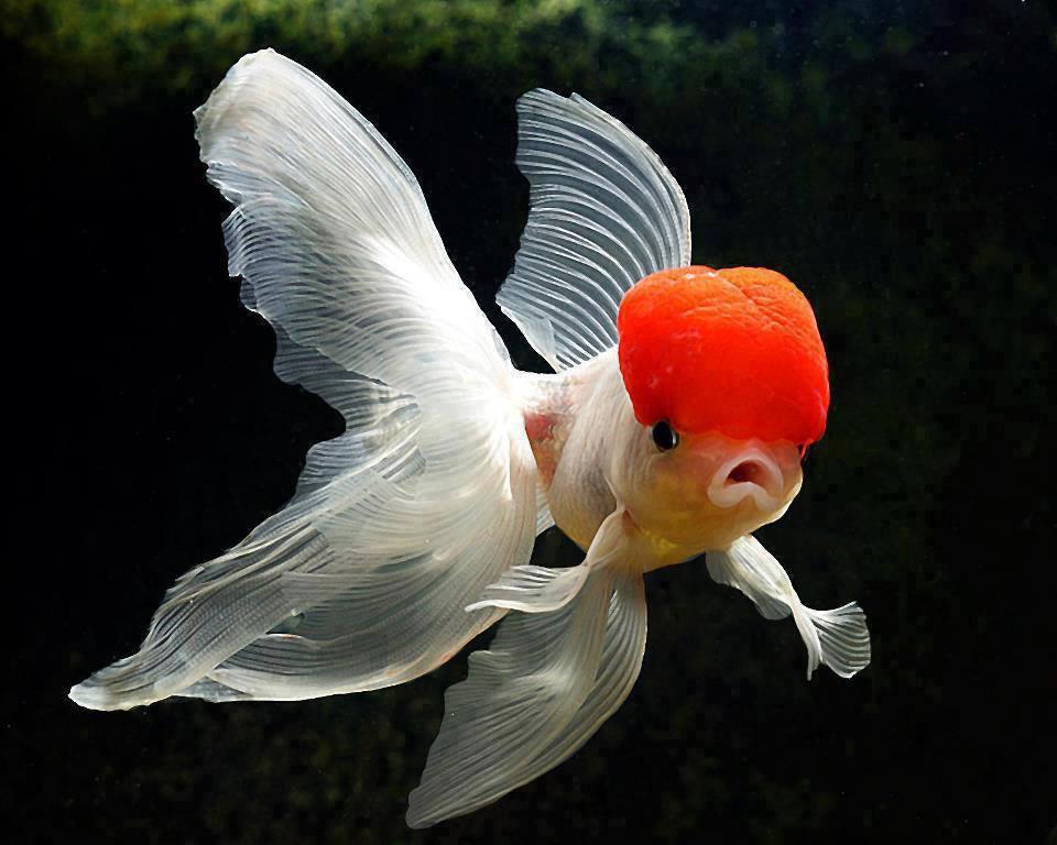 Mot cl poisson d avril bretzel liquide humour noir - Poisson image ...