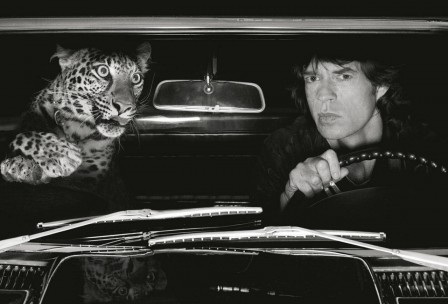 Albert Watson Mick Jagger in Car with Leopard Los Angeles couverture.jpg