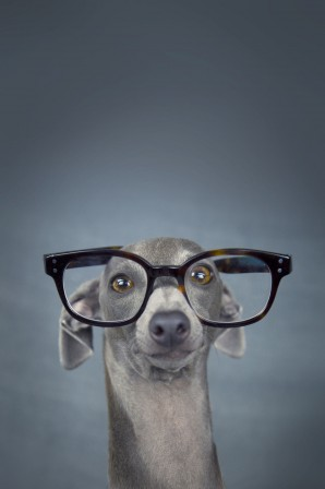 Alessandro_Manco_chien_a_lunettes.jpg