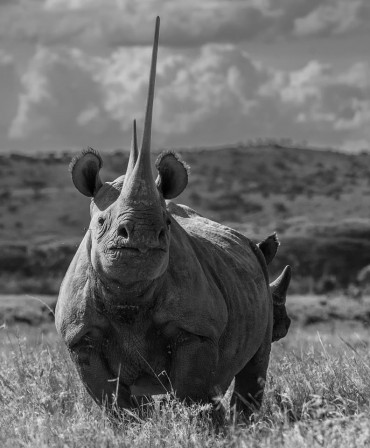 David_Yarrow_corne_de_rhinoceros.jpg