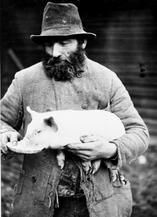 Man feeding his piglet 1909 Sweden cochon.jpg