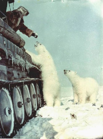 Russian_soldiers_feeding_a_polar_bear_from_their_tank_1950_guerre_tank_ours.jpg