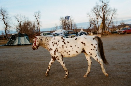 Amanda Leigh Smith cheval Appaloosa.jpg, janv. 2021